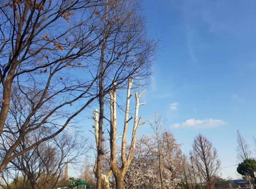 파란하늘2.jpg
